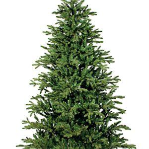 Сосна Ирландская зеленая (155 см)
